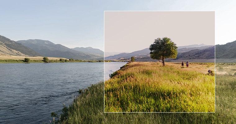 Cedar Lens
